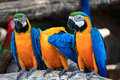 Singapore colored parrots beautiful shot of Royalty Free Stock Photos