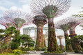 Singapore s gardens by the bay is a tropical park with towering tree like constructions in Royalty Free Stock Photo