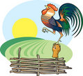 Singing Rooster and morning Sun. Stock Photo