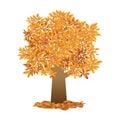 single autumn tree, orange leaf vector on white Royalty Free Stock Photo