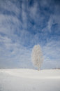 Single birch tree covered hoarfrost under blue sky clouds russia Royalty Free Stock Photography
