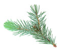 Single branch of blue fur-tree Royalty Free Stock Photography