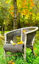 Single chair autumn background in forest Royalty Free Stock Image