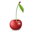 Single cherry isolated on white background Royalty Free Stock Photos