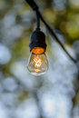 Single clear retro Edison type light bulb on string of party lights Royalty Free Stock Photo