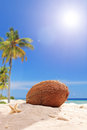 Single coconut in the sand on a tropical beach sunny day Royalty Free Stock Images