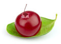 Single cranberry Royalty Free Stock Image