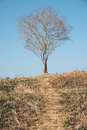 Single dead tree against blue sky Royalty Free Stock Photography