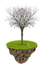 The single dead tree with lamp on isolated background Royalty Free Stock Photo