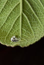 Single dew drop Royalty Free Stock Image