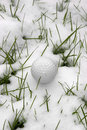 Single dimpled golf ball in the snow a lone covered grass ireland at winter Royalty Free Stock Image