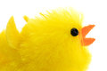 Single easter chick, isolated, close-up Royalty Free Stock Photo