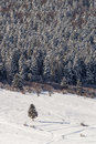 Single fir with firs in background on winter Royalty Free Stock Photo