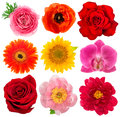 Single flower heads. Rose, orchid, peony, sunflower, gerber Royalty Free Stock Photo
