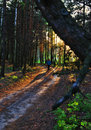 image photo : Single on a forest path