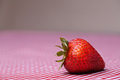 Single fresh strawberry on red gingham tablecloth sitting Royalty Free Stock Photography