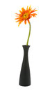 Single gerbera flower yellow on vase isolated Royalty Free Stock Photo