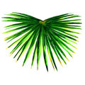 Single green palm leaf isolated