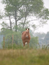 Single horse in spring paddock a chestnut stands alone a grass filled Royalty Free Stock Images
