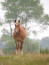 Single horse in spring paddock a chestnut stands alone a grass filled Royalty Free Stock Image