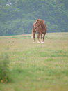 Single horse in spring paddock a chestnut stands alone a grass filled Stock Image