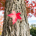 Single leaf in autumn Royalty Free Stock Images