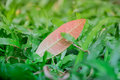 A single leaf resting upon the yard which fell from a tree after the rain storm. This young and vibrant scene is a breath of fres