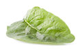 The single leaf of the spinach on white background Royalty Free Stock Photos