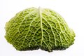 Single leaf of young green brassica isolated on white background close up macro Stock Photo