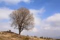 Single leafless tree on blue sky with clouds Stock Images