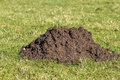 Single molehill in closeup close up of a a pasture land Royalty Free Stock Photos
