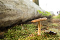 Single mushroom growing between moss in a forest in ustka poland Stock Photo