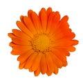 Single Orange Flower