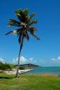 Single palm tree Royalty Free Stock Photo