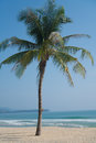 Single palm tree on a tropical beach Royalty Free Stock Photo