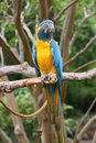 A single parrot Royalty Free Stock Images