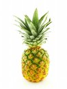 Single pineapple fresh at a white background Stock Images