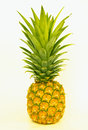 Single pineapple on white background Royalty Free Stock Photo