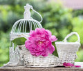 Single pink peony flower in white wicker basket on rustic wooden table lush spring garden Stock Photography