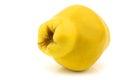 Single quince fruit Cydonia oblonga Royalty Free Stock Photo