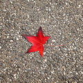Single red autumn leaf on the street floor Stock Image