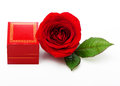 Single red rose flower Royalty Free Stock Photo