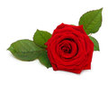 Single red rose flower with leaf Royalty Free Stock Photo
