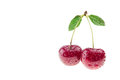 Single ripe cherry with water drops on a white background. Royalty Free Stock Photo