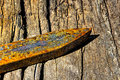 Single rusty railroad spikes laying on ground Royalty Free Stock Photo