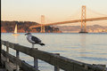 Single seagul hanging at san francisco bay usa september afternoon in a the pier Royalty Free Stock Image