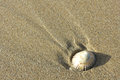 Single shell on sand in lower right hand corner Royalty Free Stock Photography