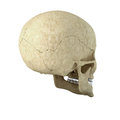 Single skull Stock Photos