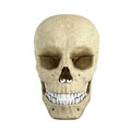 Single skull Royalty Free Stock Image