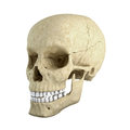 Single skull Stock Photography